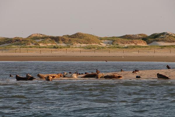 20140807-zeehondennorderney