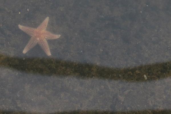 20150803-Baltrum-zeester